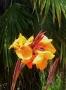 C'est l'été les fleurs illuminent le jardin