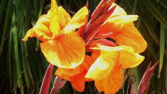 C'est l'été nos fleurs illuminent le jardin !
